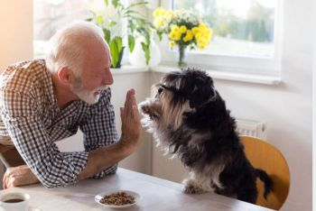 Assisted living facilities that allow pets